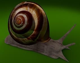 snail 3d model VR / AR ready