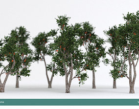 3D model Arbutus tree LOW POLY very detailed texture