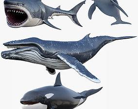 Set of Sea Animals Rigged 8K 3D asset