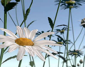 3D asset Blooming Daisies