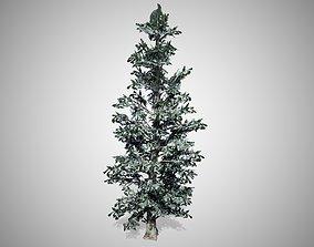 3D model Blue Spruce Winter Tree