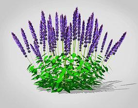 3D asset Salvia