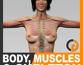 Human Female Body Muscular System and Skeleton - 3D 1