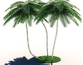 Palm Tree Collection 3D model