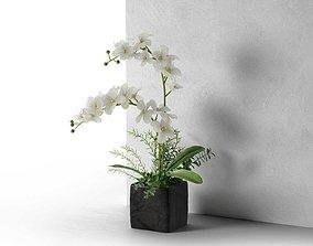 Orchid in Cube Pot 3D model