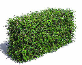 3D Cotoneaster Hedge with Flowers