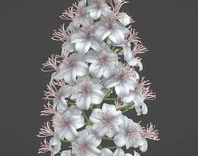 Chestnut Blossom High-Poly 3D model 3d-model