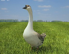 Chinese Goose Anser cygnoides 3D asset