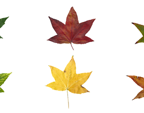 3D model American Sweetgum Leaf Texture Pack - 21 Textures