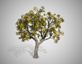 Amur Cork Tree Fall 3D model