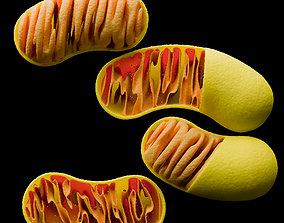 Four mitochondria models