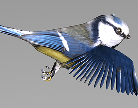 blue tit animated 3D model