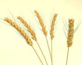 3D model ears of wheat cereal