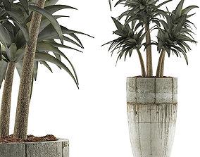 Plants Collection 94 3D