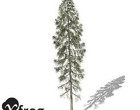 XfrogPlants Black Spruce 3D model
