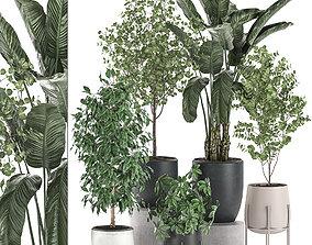Decorative plants for interior decoration in pots 3D model