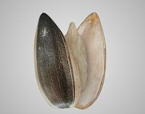 3D asset Sunflower Seed
