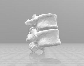 3D Female spine T11-T12 female