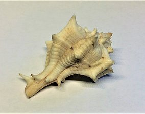 3D asset Horse conch shell