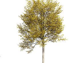 3D Ash-tree 5
