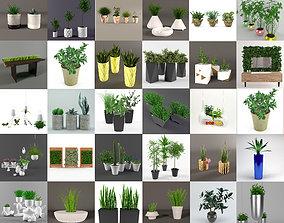 Plants 3D model flower
