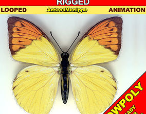 Butterfly - Anteos Menippe 3D asset animated