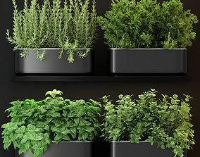 3D model Plants collection 262