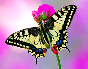 3D asset Mahaon butterfly animation