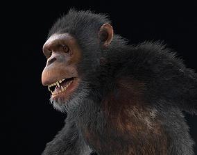 3D model Chimpanzee Rigged Hairs