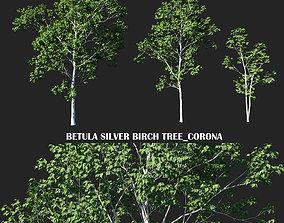 3D model Betula Silver Birch tree