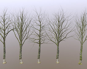 Old Forest Trees Scan 3D asset