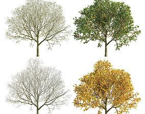 3D Apple Tree 2 Seasons