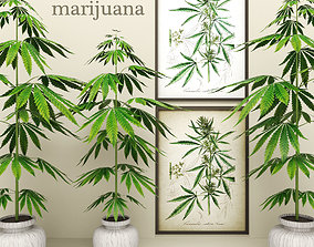 Cannabis 3D model