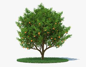 Orange Tree 3D sweet