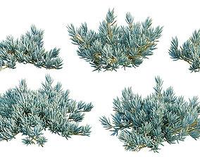 Senecio Mandraliscae - Blue Chalksticks - 01 3D model