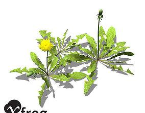 XfrogPlants Dandelion 3D model
