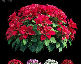 3D poinsettia Poinsettia plant 08