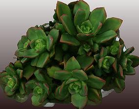 Kleinia plant 3D scan - Low Polygon low-poly