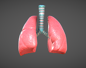 Lungs and trachea 3D asset animated