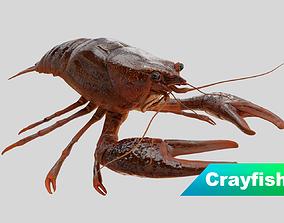 Crayfish 3D asset