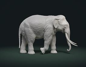 Asian Elephant 3D print model