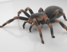 3D asset Tarantula