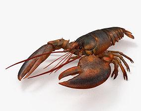 3D model Lobster HD