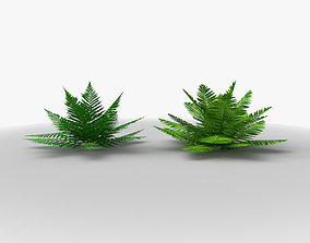 3D model low-poly Ferns