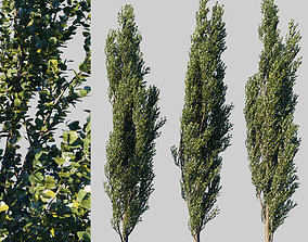 Poplar pyramidal collection leaves 3D