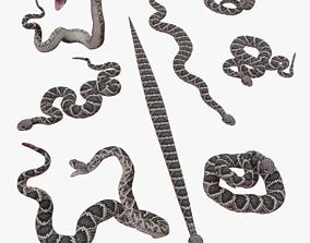 Eastern Diamondback Rattlesnake - 3D Mesh realtime