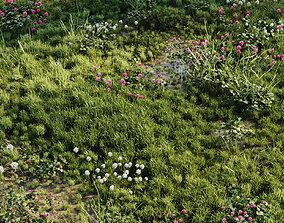 3D Meadow Grass