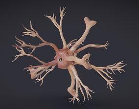 Nerve glia Astrocyte 3D model