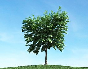 plant 3D Green Leafed Tree