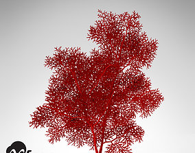 XfrogPlants Giant Sea Fan 3D model